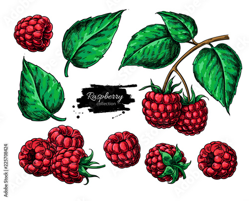 Raspberry vector drawing. Isolated berry branch sketch Tableau sur Toile