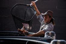 Farmer Using Fish Net At Aquaponics Tank