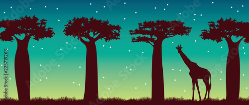 Giraffe, baobabs and night sky. African landscape. Fotobehang
