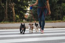 Dog Walker Crossing A Street W...
