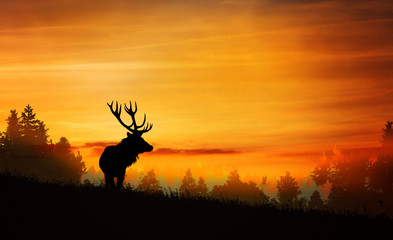 Deer in the forest at sunset
