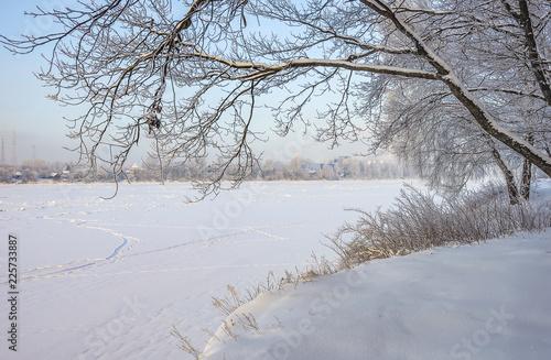 Aluminium Prints Dark grey Snowy January morning in Nevsky forest Park.