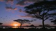 Loop of Birds fly at sunset near acacia trees on the savannah of Africa. Loop 3 of 3.