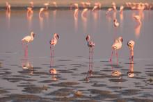 Flamingos At The Nata Bird Sanctuary, Makgadikgadi Pans National Park In Botswana