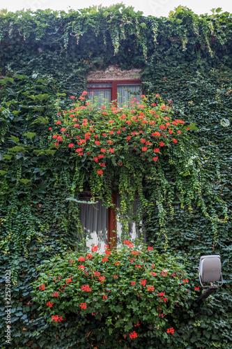 Fototapety, obrazy: Zugewachsenen Fassade