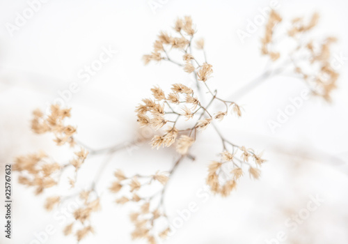 Withered plant in winter Canvas Print