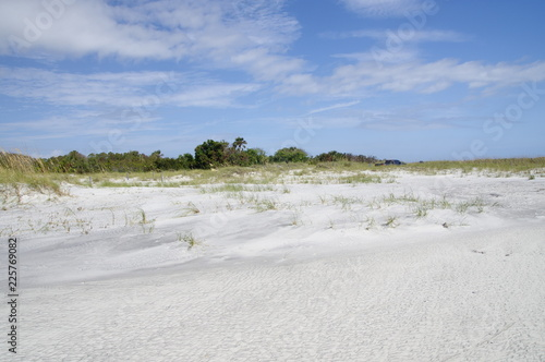 The dunes on Amelia Island Florida, Fernandina Beach is occupied by wild birds, Wallpaper Mural