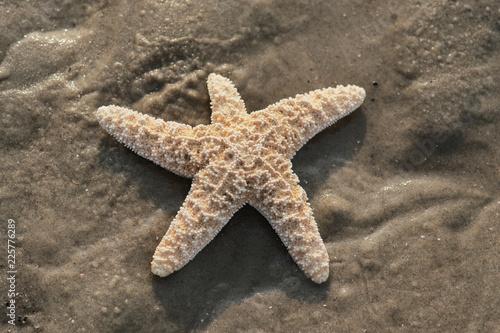 Wunderschöner Seestern am Strand