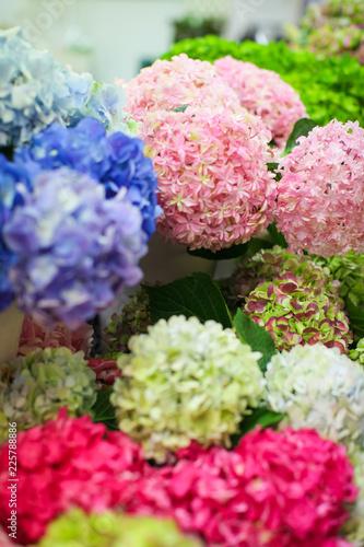 Foto op Plexiglas Hydrangea Hydrangea macrophylla - Beautiful flowers of different colors on counter in flower market for sale