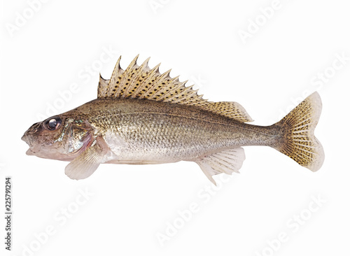 Fotografía Fish ruff isolated on white background (Gymnocephalus cernuus)