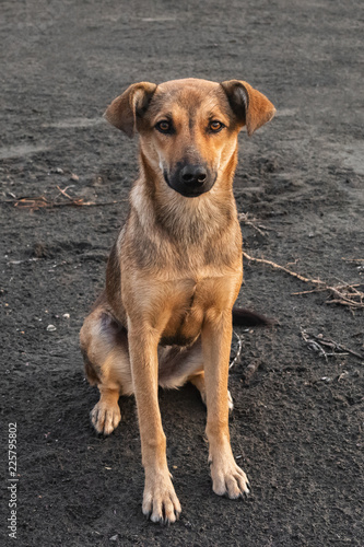 Foto  Homeless mongrel dog looking to you