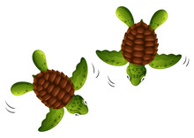 Two Baby Turtles White Background