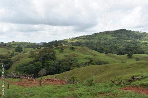 Green landscape tropical