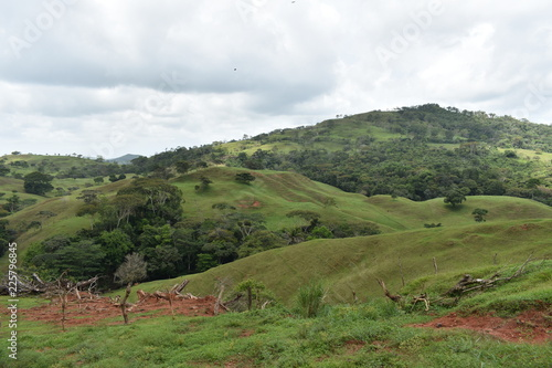 Fotobehang Wit Green landscape tropical