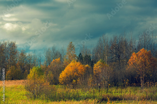 Wall Murals Melon Dark gray storm clouds over the autumn forest