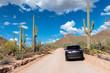 Road Trip in giant saguaros in Saguaro National Park, Arizona
