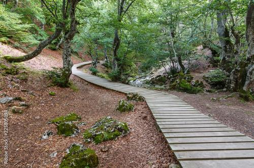 Pasarela de madera y bosque de hayas. Hayedo. Fagus sylvatica. El Faedo de Ciñera, León, España. © LFRabanedo