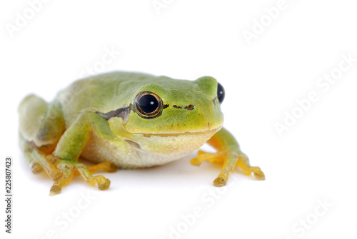 Tuinposter Kikker Green tree frog isolated on white background