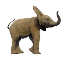 Baby African Elephant Isolated On White Background