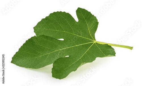 Fig leaf isolated on white background