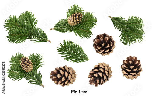 Fir tree isolated on white background Fototapeta