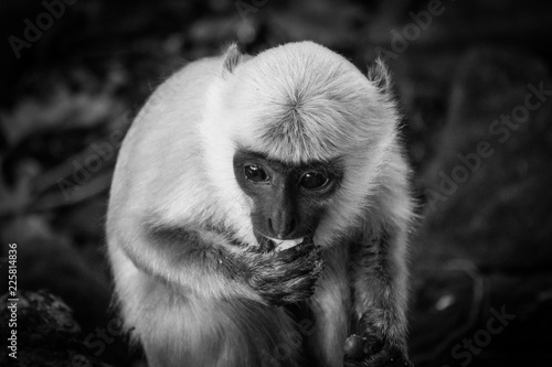 Canvas Prints Monkey Monkey Mind
