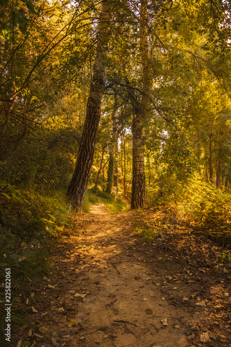 Fotografía  autumnal forest whit trees and dry leaves