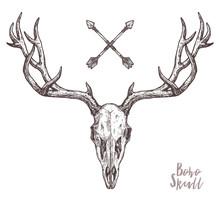 Sketch Of Hipster Deer Skull W...