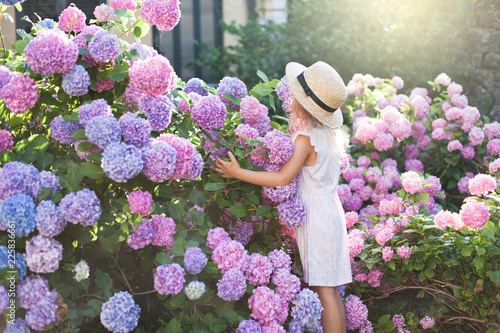 Little girl in bushes of hydrangea flowers in sunset garden Fototapet