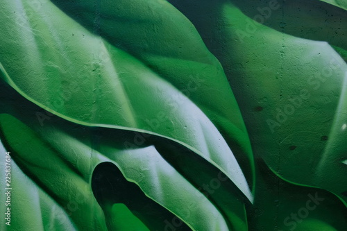 Photo sur Toile Les Textures green leaves 5