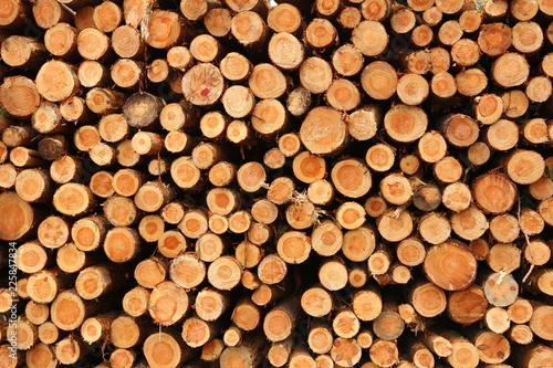 Fototapeta Naturalne tło - ścięte drzewa ułożone jedno na drugim obraz
