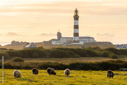 Obraz na płótnie Sheeps and lighthouse in Brittany
