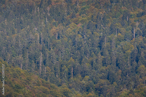 Fotografia, Obraz  Colorful endless forest on mountainside in the eary autumn