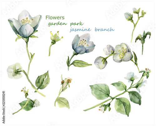 Photo Watercolor drawing with elements of jasmine.