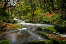 River Through The Woods, Golitha Falls, Cornwall