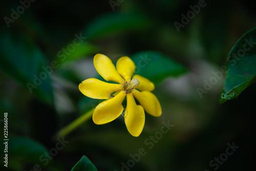 Fotografering  Beautiful yellow wildflowers