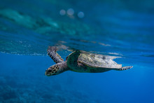 Turtle In Shallow Depth Of Field