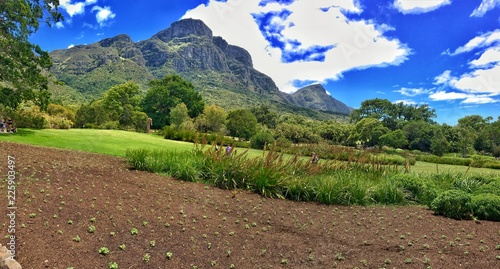 Botanical Garden Majestic Mountain, Cape Town South Africa