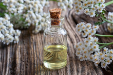A Bottle Of Yarrow Essential Oil With Fresh Blooming Yarrow