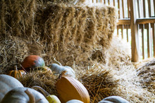 Close Up Of Large, Ripe Pumpkins In Different Shapes And Tastes In A Rural Barn. Autumn Festive Lanterns. Concept, Halloween.