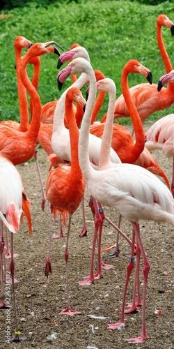Foto op Aluminium Flamingo A group of flamingos in a clearing.