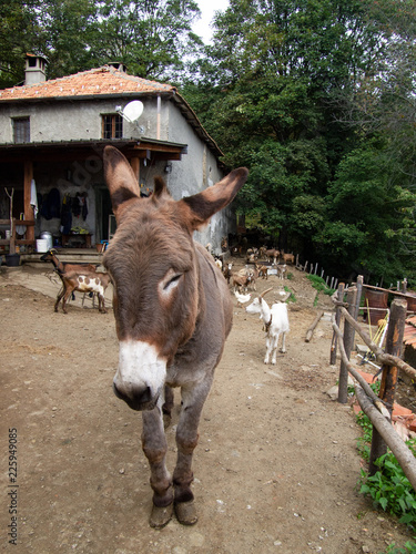 Deurstickers Ezel beautiful donkey with other free animals on the farm in a wood