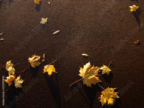 Photo Желтые листья на асфальте.