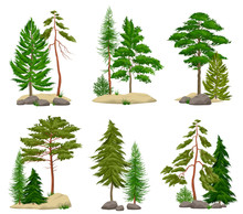 Realistic Pine Forest Elements...