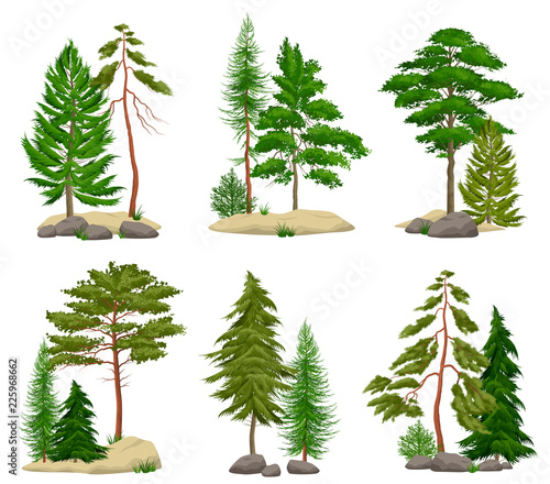 Stampa su Tela Realistic Pine Forest Elements Set