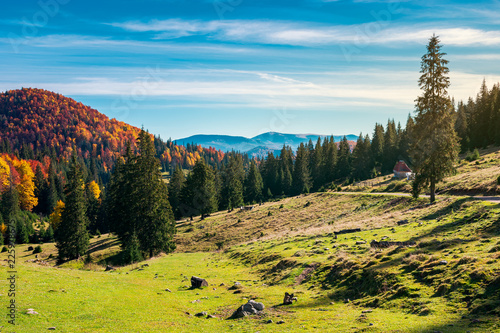 Staande foto Zwart wonderful landscape in mountains. distant mountain in fall colors on a sunny autumn morning. country road on hill disappears in spruce forest