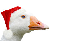 Christmas Goose With Christmas Cap