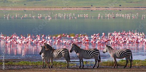 Keuken foto achterwand Zebra Zebras and wildebeests in the Ngorongoro Crater, Tanzania