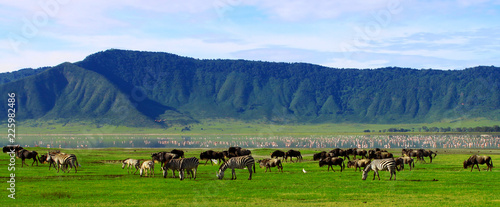 Tableau sur Toile Wildebeests in the Ngorongoro Crater, Tanzania