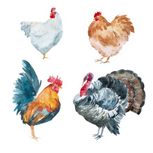Watercolor Chicken, Rooster, T...
